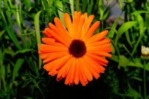 color-orange-1480710_1280