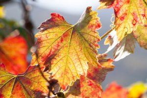 wine-1731640_1280